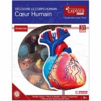 Corps humain : coeur