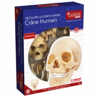 Corps humain : crâne